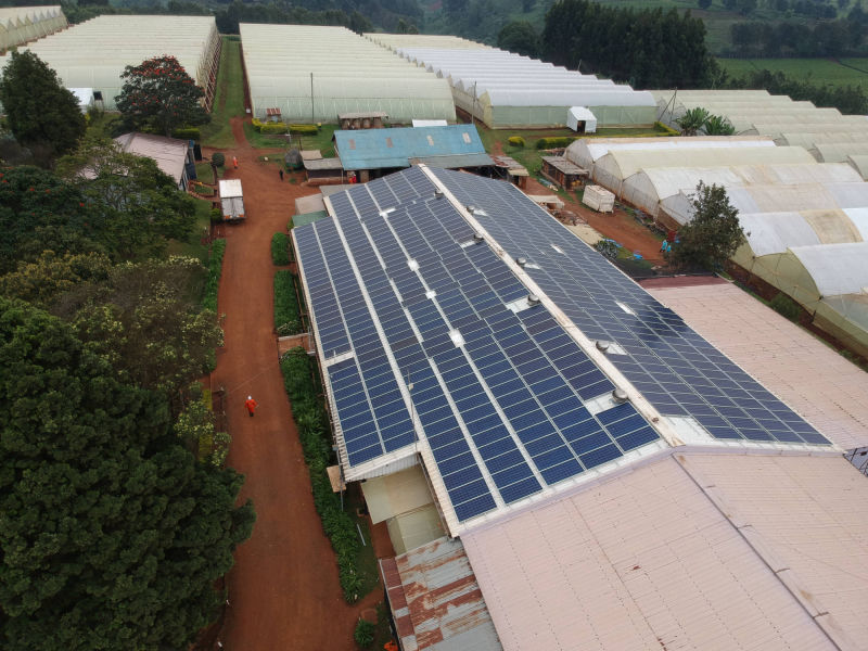 175 kW grid-tied | 2 days, Black Petals, flower farm, Kenya